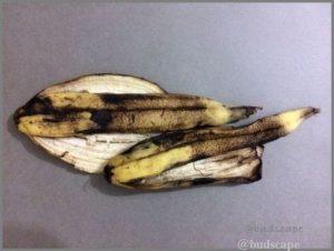 add banana peels soil