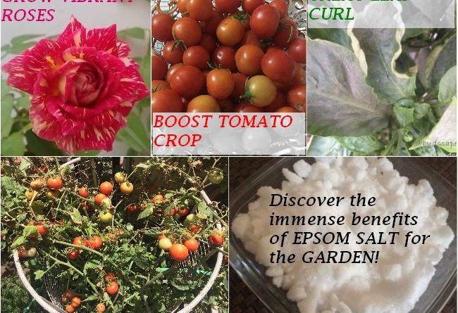7-benefits-using-epsom-salt-benefits-plants-natural-fertilizer