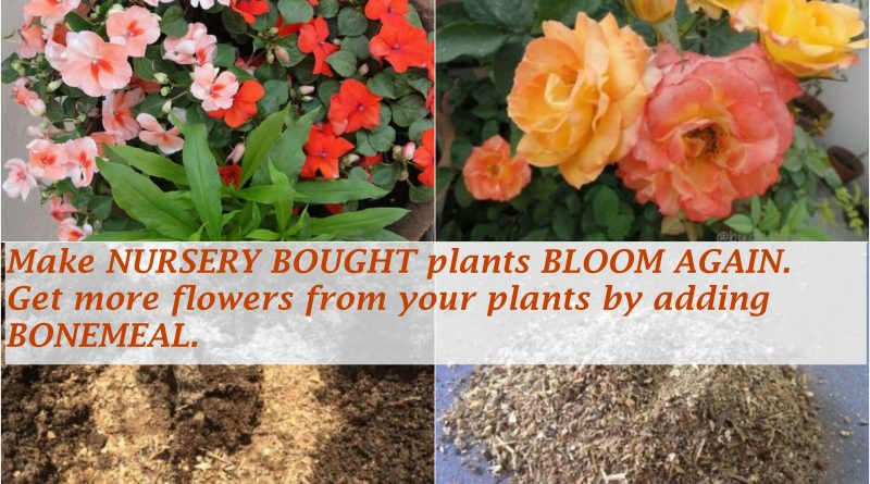 get more flowers bonemeal organic fertilzer