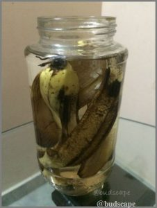 homemade organic fertilizer banana
