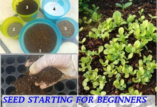 HOW TO START SEEDS EASY WAYS