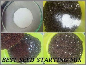 start seeds eggshells