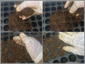start seeds tray