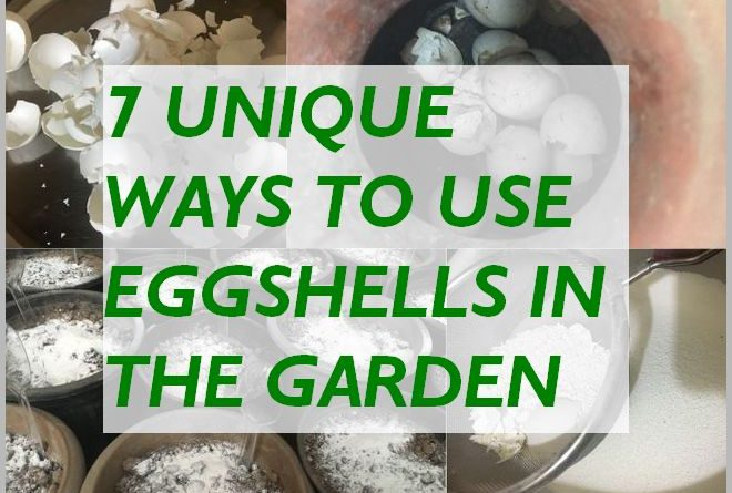 EGGSHELLS FOR PLANTS - UNIQUE WAYS TO USE EGGSHELLS IN THE GARDEN