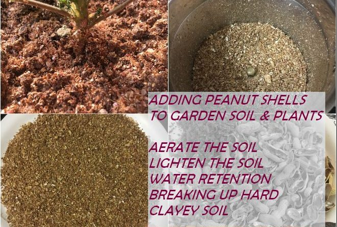 PEANUT SHELLS FOR GARDEN PLANTS