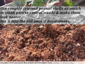 organic gardening tips india