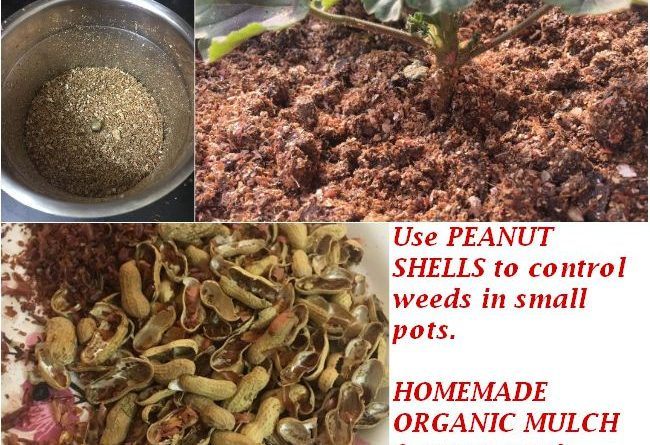 peanut shells garden uses homemade organic mulch