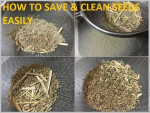 clean seeds remove husk easily