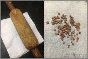 grow-dhania-coriander-home-fast