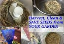 save seeds from your garden for next year
