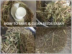 separate seed husk easily