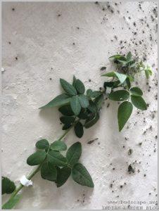 attach creeper vine walls