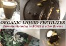 make organic liquid fertilizer roses