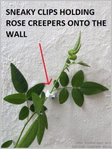 stick creeper vine walls