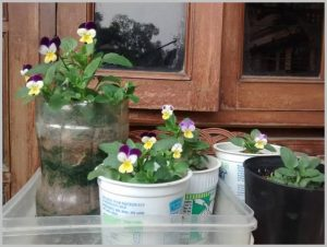 flowers yogurt cups plastic