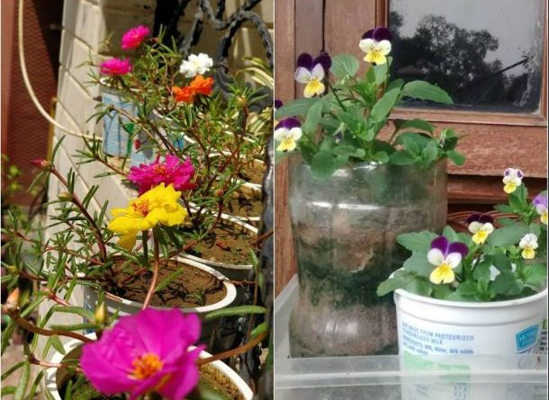 grow flowers yogurt cups recycle