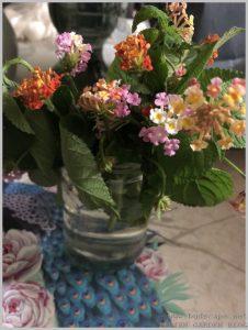 grow lantana plants