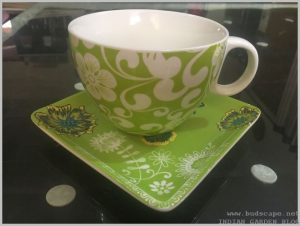 teacup planter indoors