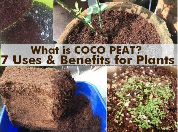what coco peat 7 uses benefits plants