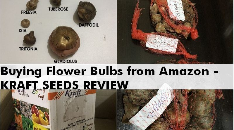 buy flower bulbs online india kraft review