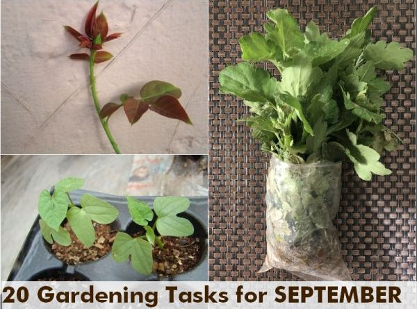 what-to-do-september-garden-tasks