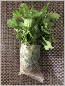when plant guldaudi chrysanthemum season