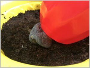 make-topsy-turvy-planter-10