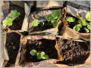 prevent-flower-bulbs-rotting-3