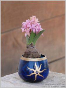 grow-hyacinth-bulb-water-1
