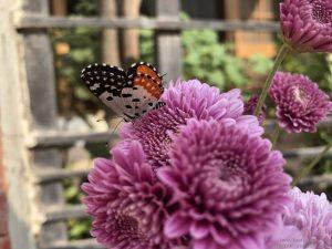butterfly-sitting-flower