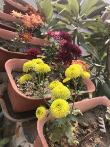 guldaudi-pots-mixed