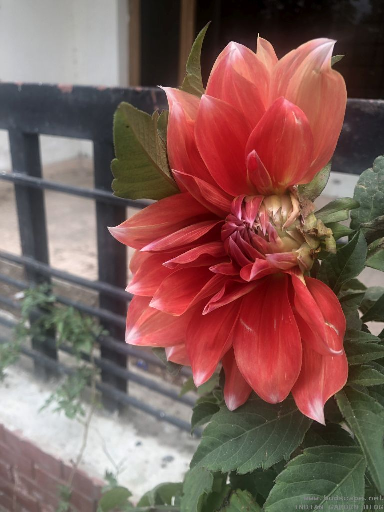 Winter Flowers In India January Vol 2 Gardening For