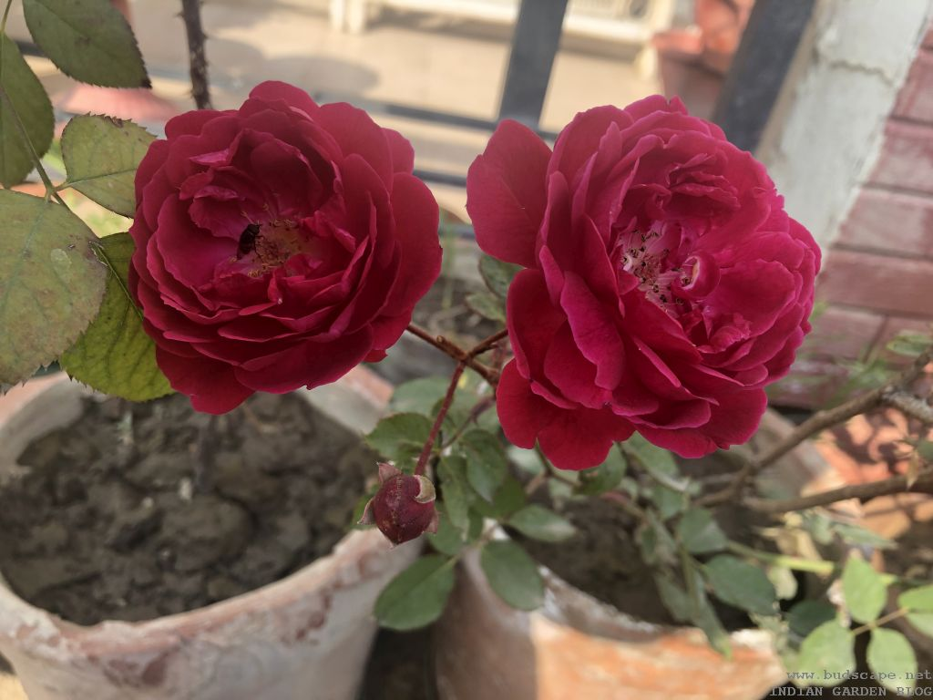 Winter Flowers In India January Vol 1 Gardening For