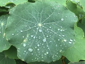 water-drops-leaf-close-up