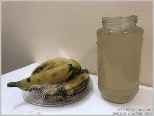 banana-peel-uses-homemade-fertilizer-5