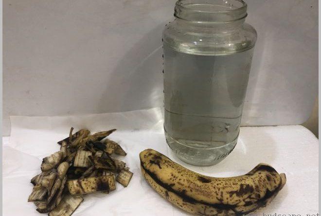 banana-peel-uses-increase-flowers-1