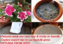 HOW TO GROW PETUNIA FROM SEED
