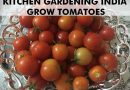 grow-winter-vegetables-india